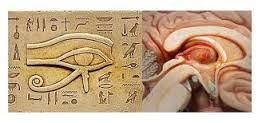 בלוטת האיצטרובל והעין של הורוס