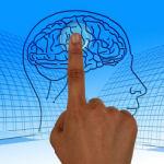 מיתוסים על המוח האנושי